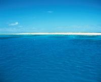 海鳥の楽園 ミケルマスケイ島 オーストラリア