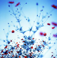 黄花コスモスの花