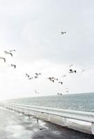 雨上がりの海岸を飛ぶカモメ 01143045446| 写真素材・ストックフォト・画像・イラスト素材|アマナイメージズ