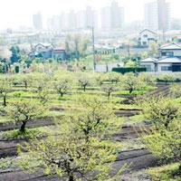 農地と住宅地