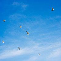 青空とカモメ 01143045546| 写真素材・ストックフォト・画像・イラスト素材|アマナイメージズ