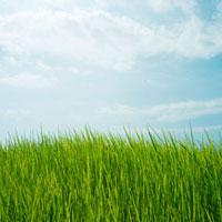 夏草と青空