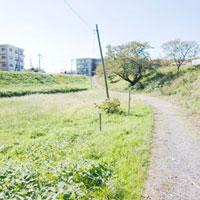多摩川河川敷の道