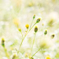 河川敷の雑草 01143045700| 写真素材・ストックフォト・画像・イラスト素材|アマナイメージズ