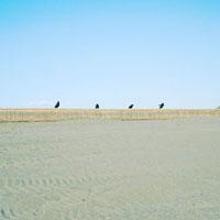 砂浜の防砂柵にとまるからす 01143045739| 写真素材・ストックフォト・画像・イラスト素材|アマナイメージズ