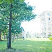団地公園の青い芝生と木立