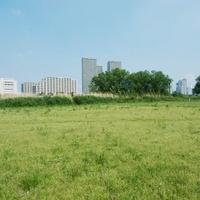 河川敷緑地と対岸のビル群