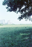 2羽のハトがいる緑地の遠景 01143045770| 写真素材・ストックフォト・画像・イラスト素材|アマナイメージズ