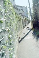 表通りに向かう住宅街の細い坂道