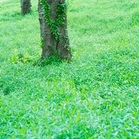 里山の樹木