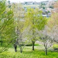 根岸森林公園からの住宅街の眺望
