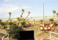 九十九里有料道路をくぐるトンネルとユッカ