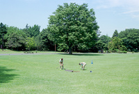 昭和記念公園の草地と二人の管理人