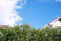 生け垣と住宅と白い雲
