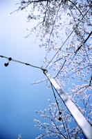 青空と桜を背景にした住宅地の金属支柱