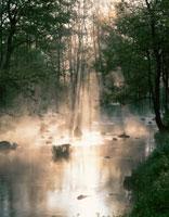 朝霧の中の渓流 裏磐梯 福島県