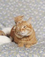 ソファーの上のネコの親子