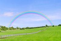 緑の牧草地の丘と虹