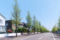 銀杏並木のある住宅街の道