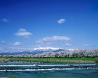白石川堤と一目千本桜