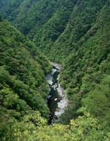 新緑の祖谷渓