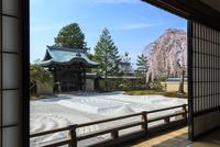 高台寺方丈から見るしだれ桜咲く波心庭と勅使門