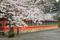 春の山科毘沙門堂