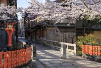 サクラ咲く祇園巽橋