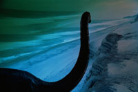 恐竜と海岸 合成