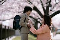 桜の木下に立つ男の子とお母さん