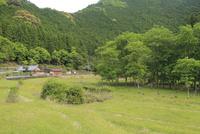 新緑のクヌギ林 01334002978| 写真素材・ストックフォト・画像・イラスト素材|アマナイメージズ