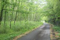 新緑の雑木林 01334003304| 写真素材・ストックフォト・画像・イラスト素材|アマナイメージズ