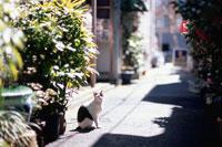 路地に座る猫 01336033490| 写真素材・ストックフォト・画像・イラスト素材|アマナイメージズ