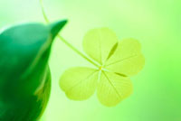 小鳥がくわえた四つ葉のクローバー 01336033966  写真素材・ストックフォト・画像・イラスト素材 アマナイメージズ