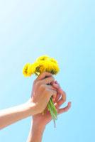 積んだたんぽぽの花を空にかかげる女の子の手