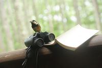 双眼鏡と本と野鳥 01336034765| 写真素材・ストックフォト・画像・イラスト素材|アマナイメージズ