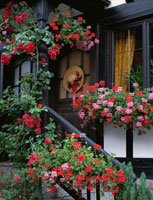 ガーデニングの花々とドアに飾られた帽子 ロマンチック街道