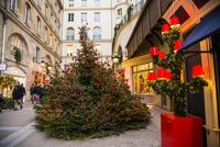 パリヴィラージュ・ロワイヤルのクリスマスイルミネーション 01362012522| 写真素材・ストックフォト・画像・イラスト素材|アマナイメージズ