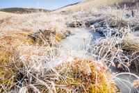 凍るイモリ沢