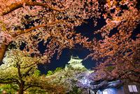 夜桜の長浜城ライトアップ