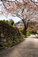 桜咲く三多気の風景