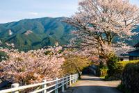 桜咲く三多気の山村