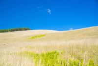 霧ヶ峰イモリ沢 輝く草原と青空に浮かぶ雲