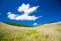 霧ヶ峰イモリ沢 輝く草原と青空に浮かぶ雲 01362015699| 写真素材・ストックフォト・画像・イラスト素材|アマナイメージズ