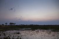 夜明けの湿原