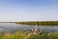 オカバンゴ川の本流パンハンドル