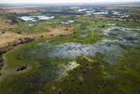 オカバンゴ・デルタの沼地と中島