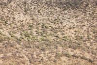カラハリ砂漠眺望