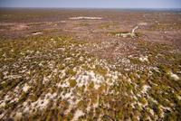 オカバンゴ・デルタの潅木地帯