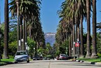 ヤシの木の並木道とハリウッドサイン
